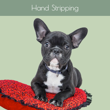 Hand Stripping