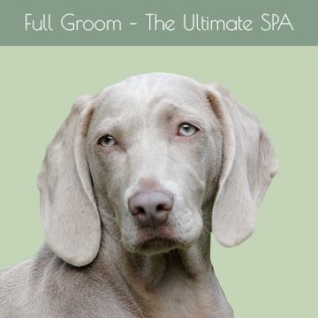 Full Groom – The Ultimate SPA Experience